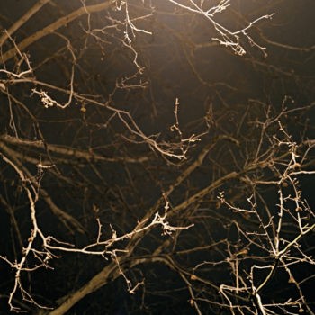 Teoksen nimi: Branches, from the series The Book of Hours
