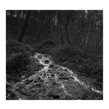 Teoksen nimi: Metsän henkiä – Spirits of the Forest