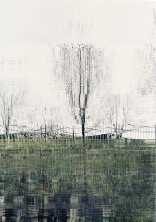 1.12.2009 (Tree)