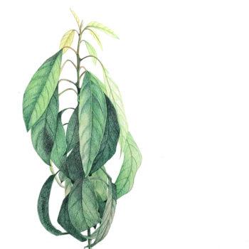 Name of the work: Puhu mulle (avokaado)